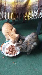Baby Katzen und Kater suchen