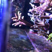Korallen Ableger Acropora Millepora Euphyllia