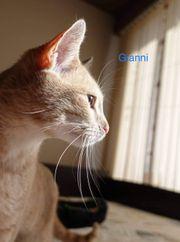Gianni lieber Tierschutzkater sucht Kuschelkörbchen
