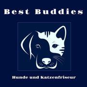 Professioneller Hundefriseur Katzenpflege