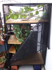 Terrarium für Chamäleon oder ahnliches
