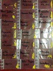 Chili Samen Set 24 Sorten