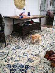 Labrador Welpen blond schwarz m