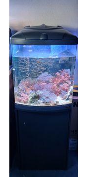 130l Meerwasseraquarium