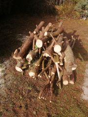 Brennholz Kaminholz Kiefer