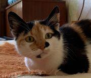 Tierschutzkatzen - 1 Jahr - Suchen ein