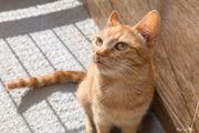 ALEXANDRA - Liebes Katzenmädchen wartet sehnsüchtig