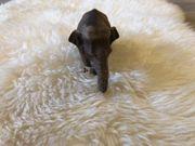 Verkaufe unbenutzten Schleich Elefant