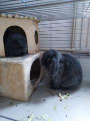 2 Kaninchen zu verschenken