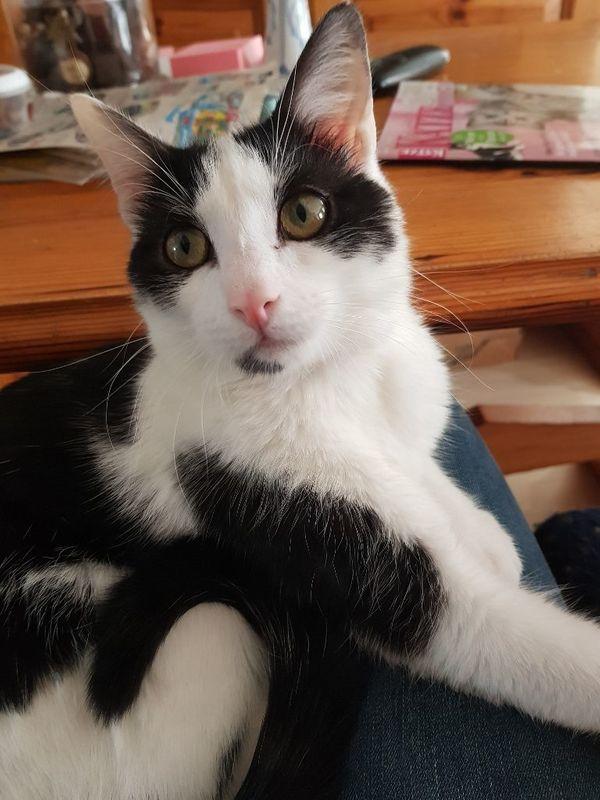 Sphynx Katze Tierheim