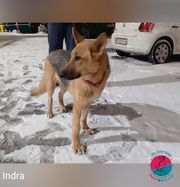 Indra - energiegeladene Schmusemaus