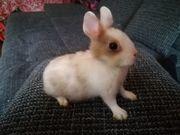 Kaninchen Abgeben Tierpark