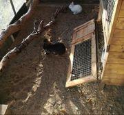 Kaninchen Kleintier Außen Stall stabil