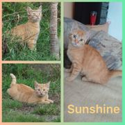 Roter Baby Kater Sunshine sucht