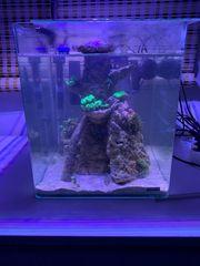 Nano Meerwasseraquarium 25 l mit