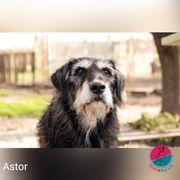 Astor- Kleiner Wuschel auf der