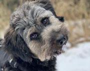 Bruno ängstlicher Hundemann ca 3