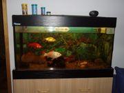 Verkaufe schönes 100 Liter Aquarium