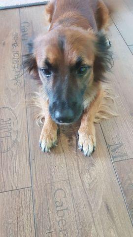 Terrier und Pinscher Mix suchen: Kleinanzeigen aus Berlin Spandau - Rubrik Hunde