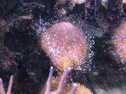 Korallenableger Pilzleder und Co