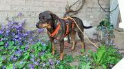 Arni ein lieber Hundebub sucht