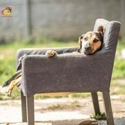Süße Hundeseele Aresko