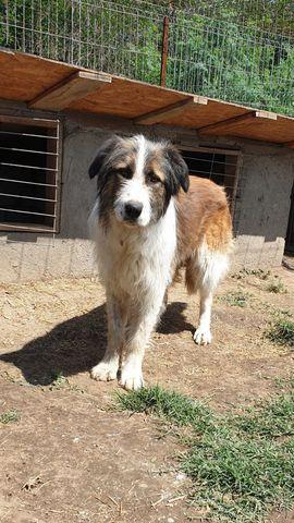 Salonia eine ca 2-jährige Hündin: Kleinanzeigen aus Alfeld - Rubrik Tierschutzvereine, -heime