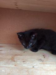 baby kitten suchen neues zuhause