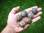 Schildkröten gesucht