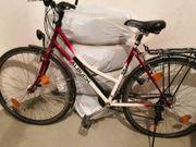 Damen Fahrrad Abin Kotter Trekkingfahrrad