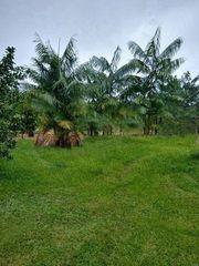 Brasilien 50 Ha Tiefpreis -Grundstück