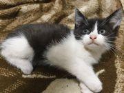 3 katzenbabys Babykatzen 9 5