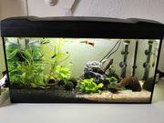 Aquarium 54l Komplett