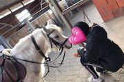 reitbeteiligung gesucht mensch sucht pferd