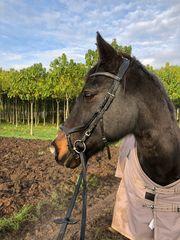 Liebes Pony sucht neue Familie
