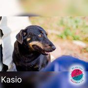 Kasio- unser kleiner Kämpfer