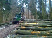 Buche Stämme Brennholz