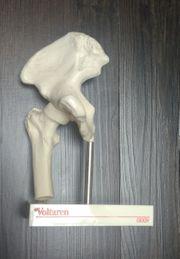 Minimodell Hüftgelenk auf Sockel - Neuwertig