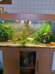 160 L Juwel Aquarium Buch