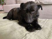 Traumhund Habusho sucht ein Zuhause