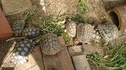 Landschildkröten mit Cites