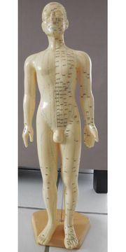 Akupunkturmodell männlich ca 60 cm