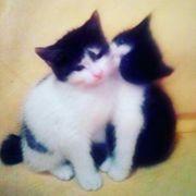Kitten 1Weibchen 1Mändlich