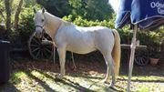 Biete Pflegebeteiligung Pferdeflüstern Horsemanship