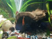 Garnelen Welse Aquarium Technik Fische