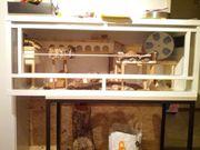 Großes Terrarium für Hamster aus