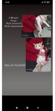 Verschenken katzen