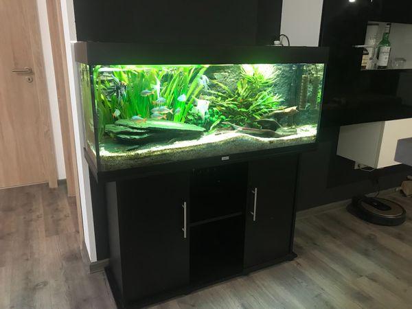 Aquarium 240 L inkl Zubehör