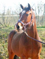 Paint Horse Stute