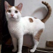 Katzenbub Filius sucht sein Körbchen